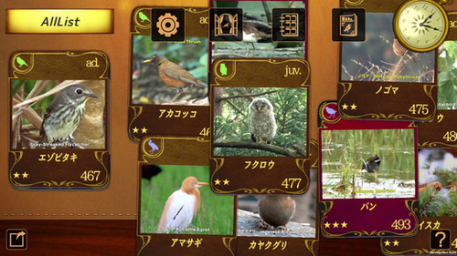 BirdsCollection1.jpeg